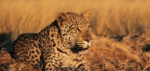 Namibia's Big Cats Experience
